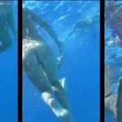 Amazing Dolphin Encounter