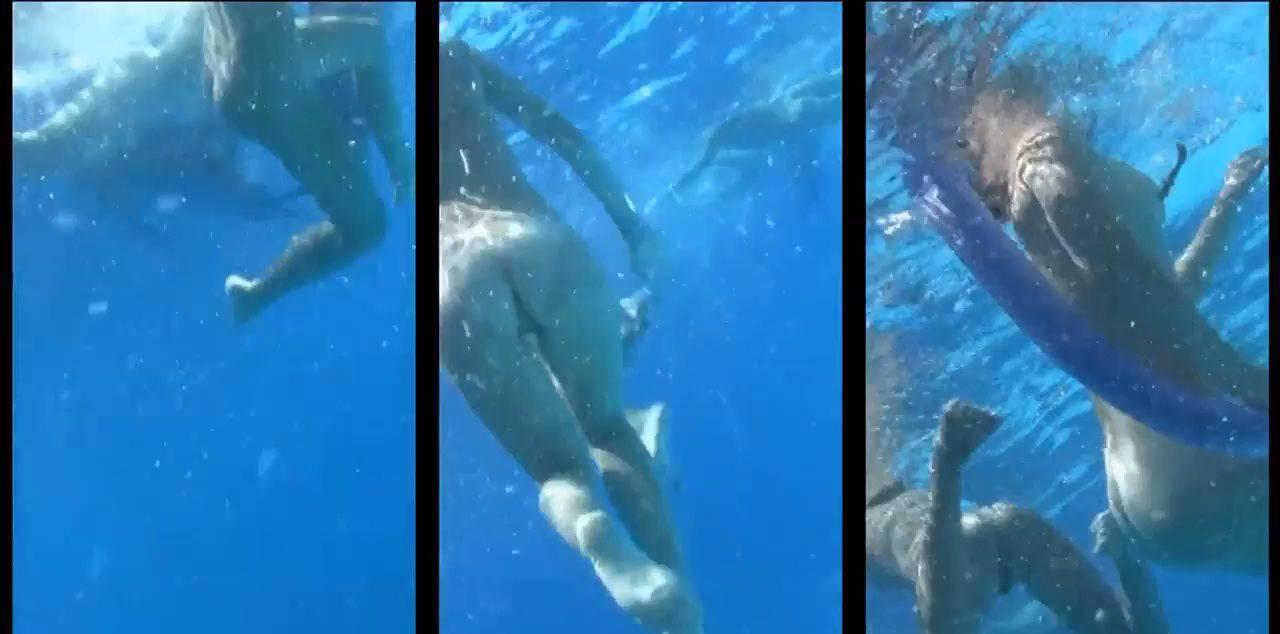 Candid-HD Videos Amazing Dolphin Encounter - 1
