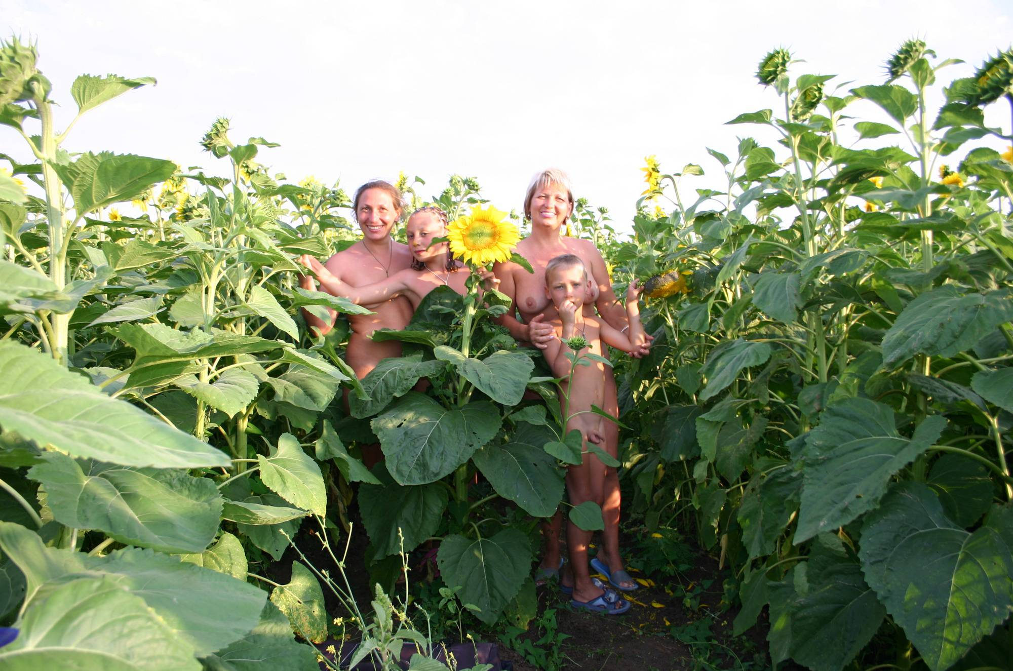Nudist Pics Outdoor Sunflower Fields - 1